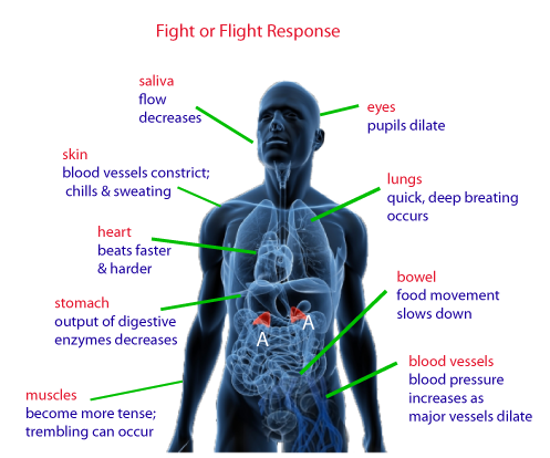 combat adrenal fatigue